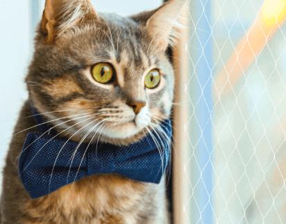 Safety Home Mallas de Seguridad | Mallas de Protección – Mascotas: Importancia de mallas de seguridad, evita caídas y fracturas.